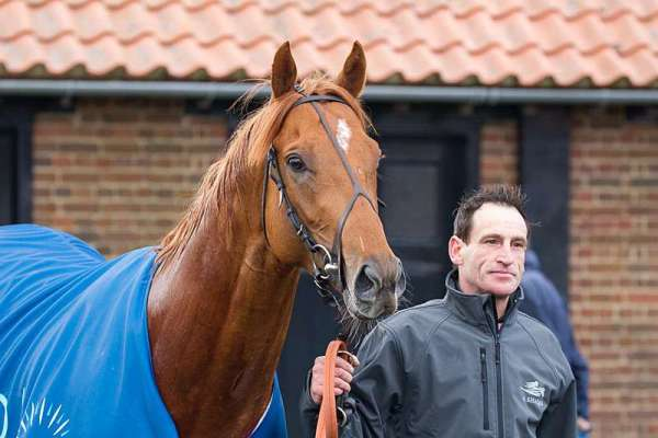 Derby option for Galileo Gold