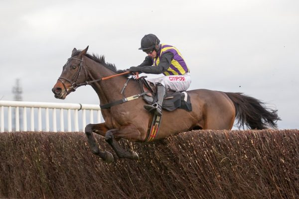 O'Faolains Boy ruled out of Gold Cup