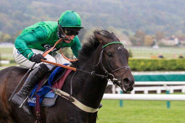 Champion Hurdle the aim for Sceau Royal
